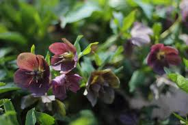 15 shade loving plants for your cutting