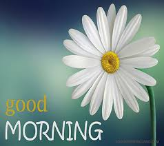 good morning flower images free