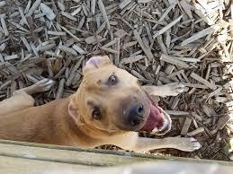 natural dog treats liver and turmeric