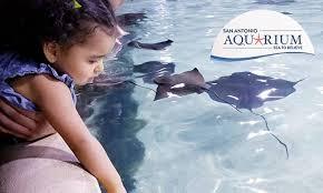 san antonio aquarium from 24 95