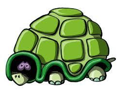"""Afbeeldingsresultaat voor schildpad axenroos"""""""