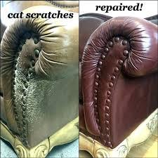 cat leather sofa easy craft ideas
