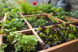 pros and cons of square foot gardening