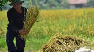Tersisa 3.500 Petani, Setahun 1.000 Hektare Lahan Pertanian Jadi ...