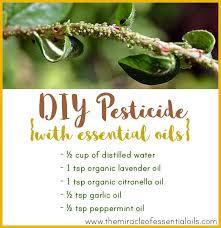 homemade essential oil pesticide the