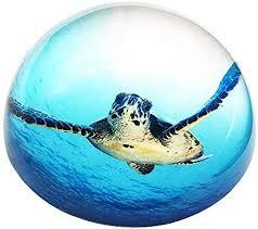 waltz f crystal sea turtle paperweight