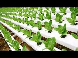 hydroponic gardening grow organic
