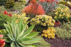succulent garden design essentials from
