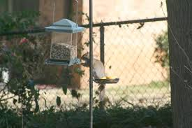 Bird Feeding Station With Four Arms Gardeners Com