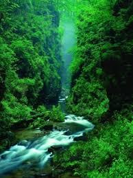 green and waterfalls nature wallpaper