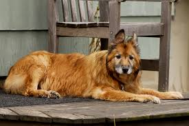 best dog food for arthritis and