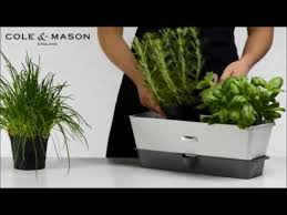 cole mason triple potted herb keeper