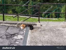Cute Cats Street Stray Kitten Outdoor Stock Photo Edit Now 1164837142