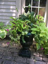 possible choices for shade planter