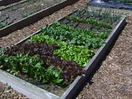 raised garden beds 3 great woods to