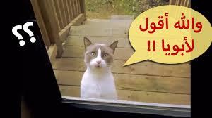 قطط مضحكة تتكلم الجزء الثاني Youtube