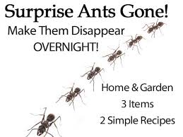 surprise ants gone make them disappear