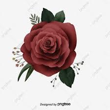 وردة حمراء الورد الوردة زهرة حمراء Png صورة للتحميل مجانا