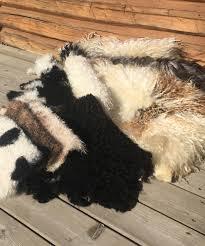 at home sheepskin tanning amika ryan