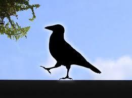 Crow Stickers Raven Wall Or Window Bird Stickers