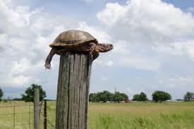 Post Turtles