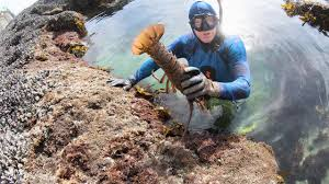 Secret Lobster Hotspot - YouTube
