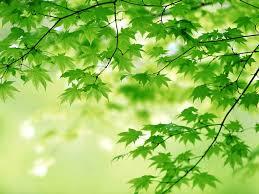 روعة اللون الاخضر صور نباتات متميزة تصلح خلفيات صوري