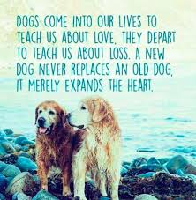 dog loss quotes and images to help you cope playbarkrun