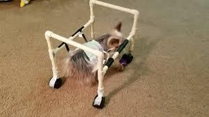 homemade dog wheelchair you
