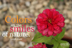 colors are the smiles of nature love this quote quotes flowers