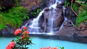 beautiful waterfall and pink flowers