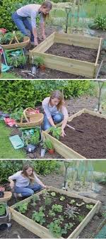 grow vegetables in raised bed gardens