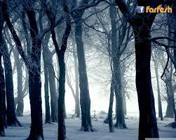 Farfeshplus Com فرفش بلستساقط الثلوج يجمع اغصان هذا الغابة معا