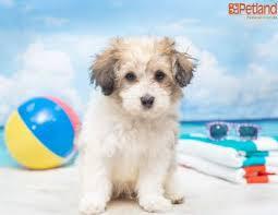 stolen puppy s theft suspect