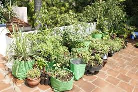 very own organic kitchen garden