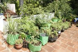 very own organic kitchen garden