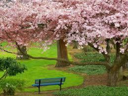 صور الربيع 2020 اجمل الصور والخلفيات عن فصل الربيع يلا صور