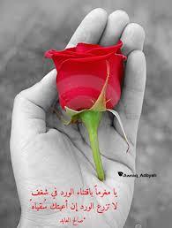 شعر عن الورد اجمل ما قيل عن الورود كارز