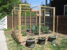 Nice Small Raised Beds 24 Deep Surrounded With Chicken Wire For Protection From Animals Totally Doable Garden Design Patio Garden Perennial Garden