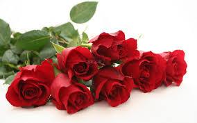صور ورد احمر التعبير عن الحب بورده و احده دموع جذابة