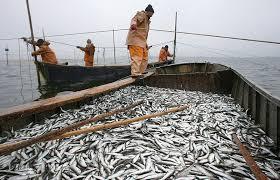 В акватории Каспийского моря калининградские рыбаки приступили к промышленному вылову кильки