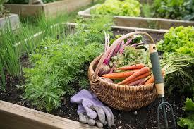 october gardening to do list