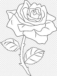 فن الخط رسم كتاب تلوين الورود الورود بالأبيض والأسود ق الأبيض