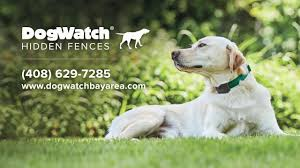 Dogwatch Of The Bay Area Northern Ca Get To Know Your Local Dogwatch Hidden Fence Dealer Youtube