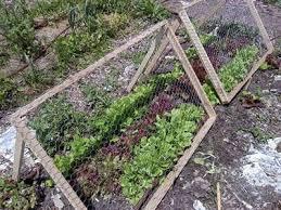 Chicken Wire Mesh Used In Garden As Fence Raised Bed Trellis Manufacturers Suppliers Supplierlist Com