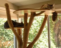 The Cat Tree Necessity - Critical Shots