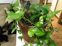 cuidar tus plantas de interior