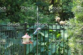 Blue Jay And Cardinal Birds Perched On Backyard Bird Feeder With Squirrel Looking From Black Metal Garden Fence In Green Leaf Forest Stock Photo Download Image Now Istock
