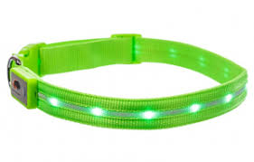 Led Dog Collar The 10 Best Lighted Dog Collars Of 2020 Dogsrecommend
