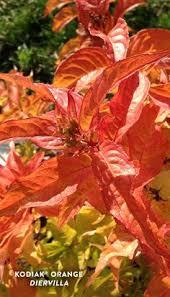 10 Orange Plants Ideas In 2020 Plants Orange Plant Orange Flowers